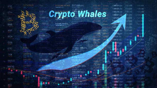Bitcoin(BTC)Pokreti i masovne doznake vjerojatno će sugerirati kupnju kitova (velikih ulagača), poput institucionalnih ulagača